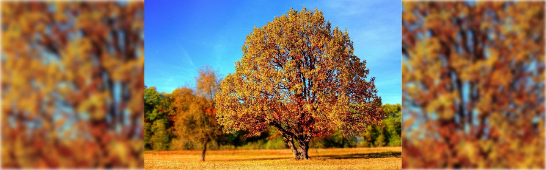 Święto Drzewa