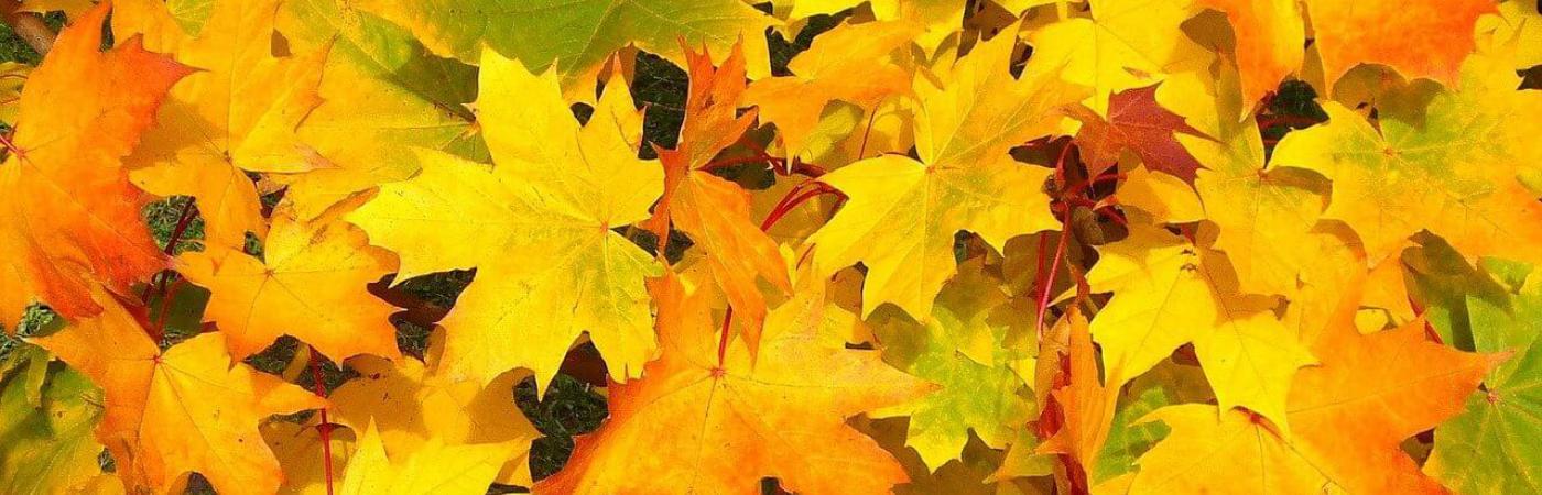 Jesienna sesja fotograficzna w plenerze